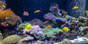 marine-fish-tanks