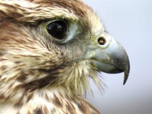bird-eye