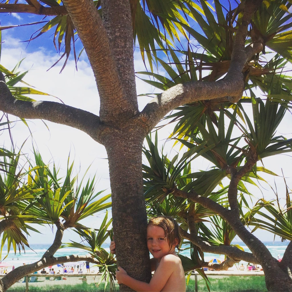 kirra-palms