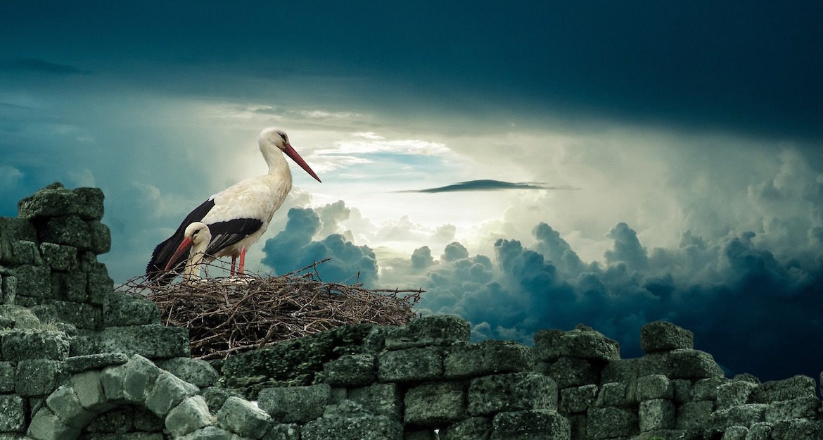 stork-and-baby