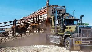 beef-cattle-truck