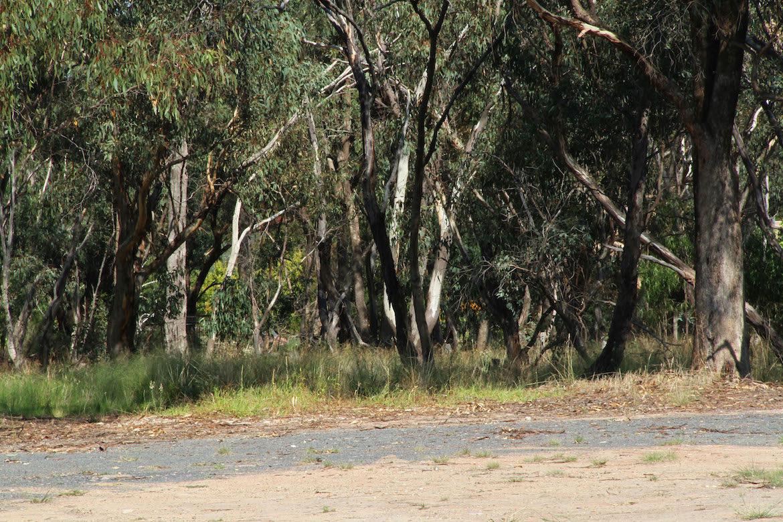 australian-bush-scene
