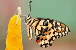 butterfly-beauty