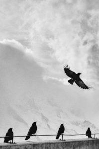 flying-birds-watching