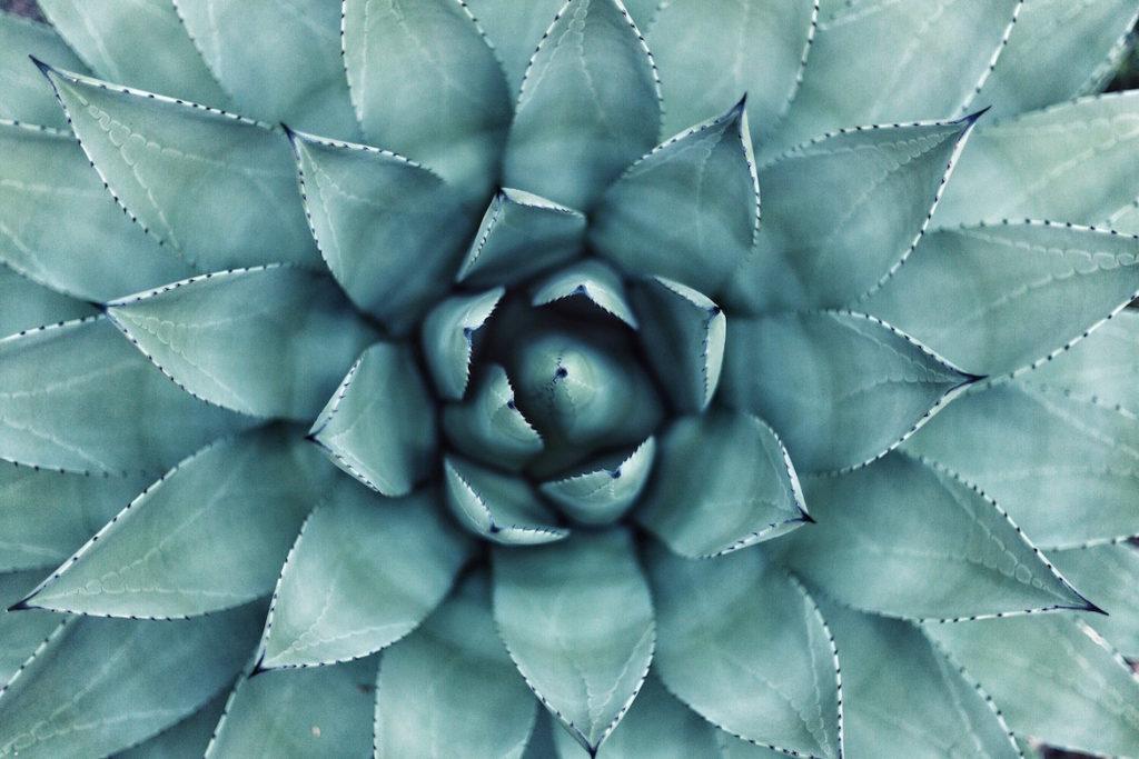 plant-geometry