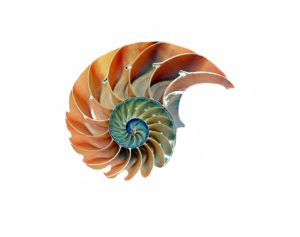 shell-nautilus