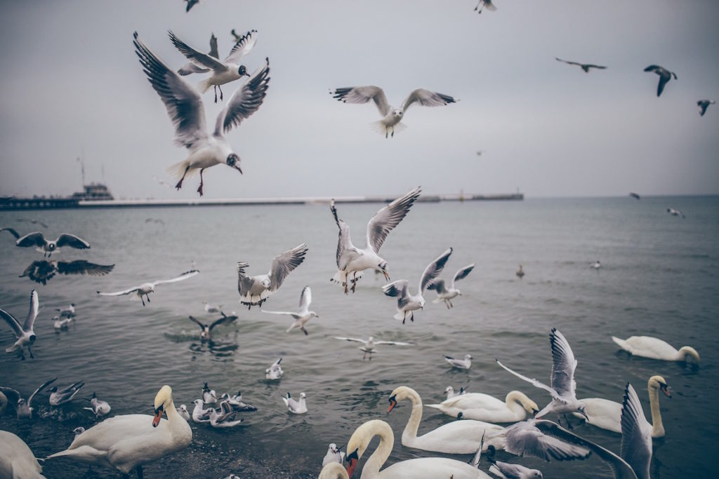 white-birds-air-and-water