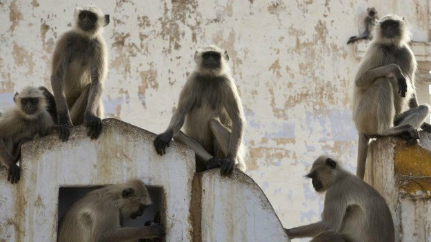 a-group-of-monkeys