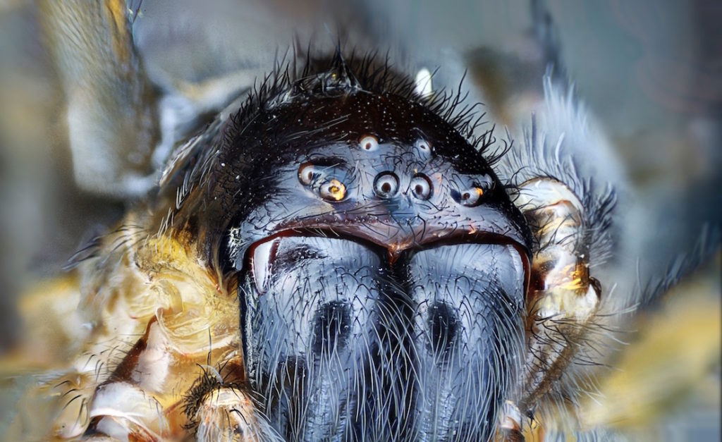 scary-ilooking-spider