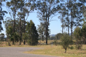 tall-gum-trees-vacy