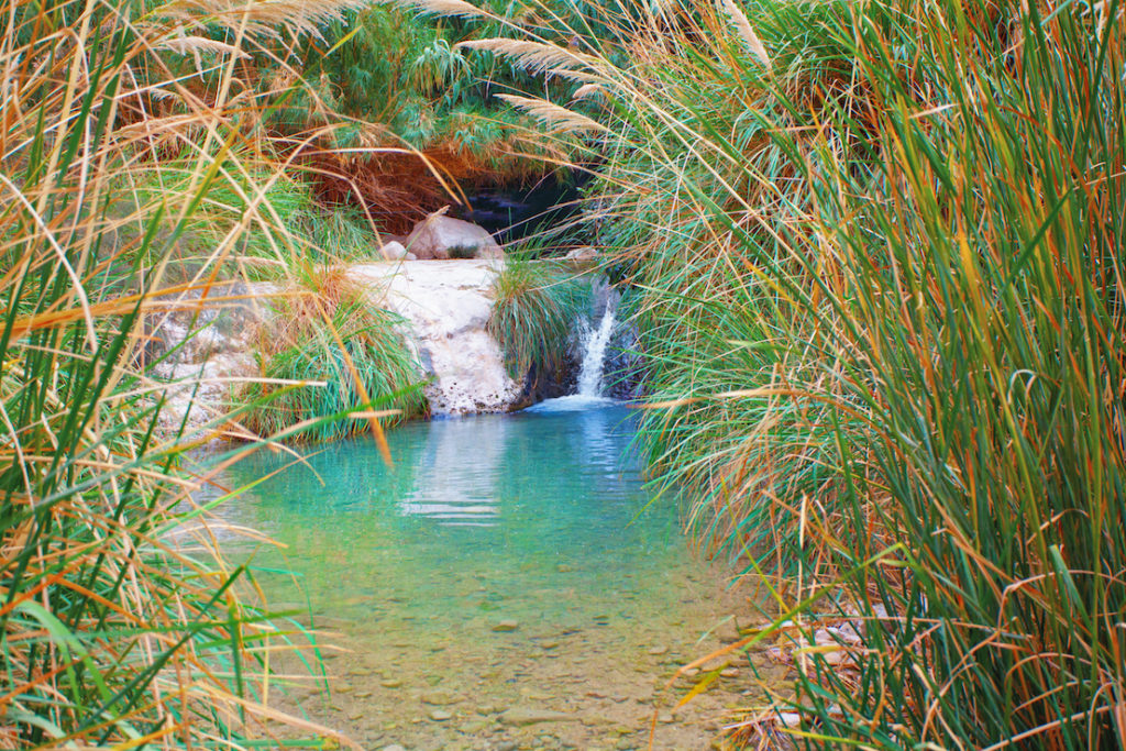 waterfall in Ein Gedii oasis in the Judaean Desert