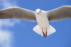 white-bird-in-flight