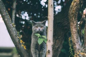 cat-looking-straight-ahead