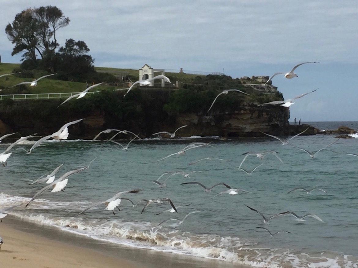 seagulls-flying-over-water.