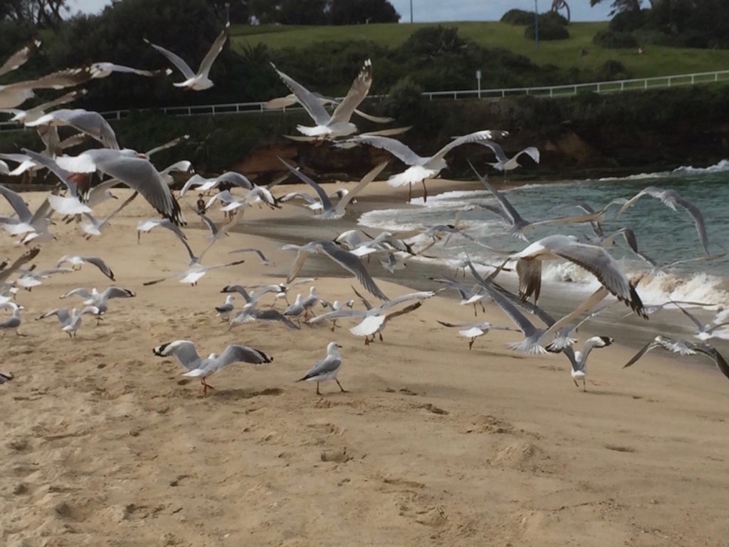 seagulls-in-flight
