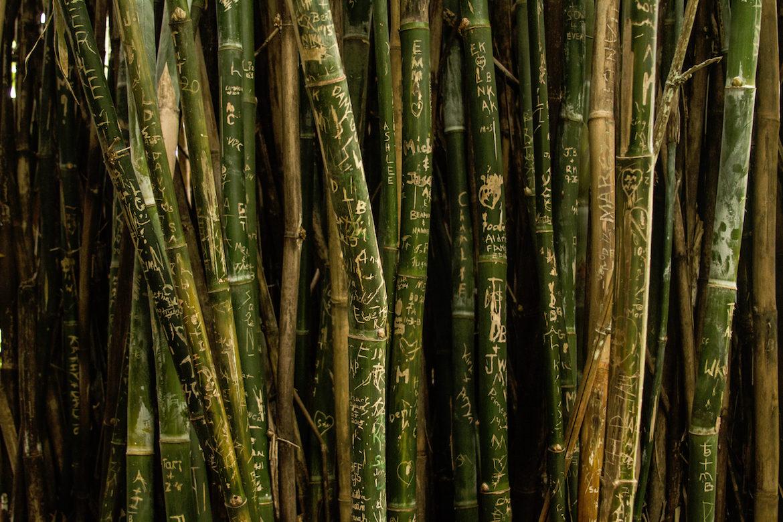 cane-writing-nature