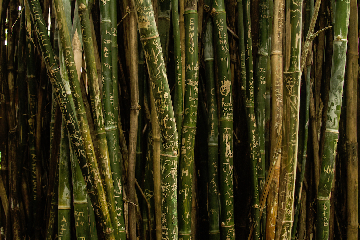 cane-writing-nature
