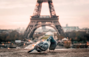 love-eiffel-tower-pigeons