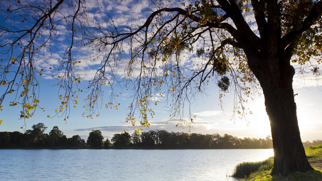 tree-grafton-susan-island