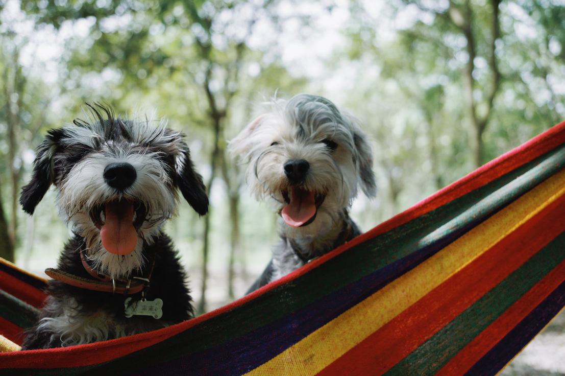 two-dogs-on-hammock
