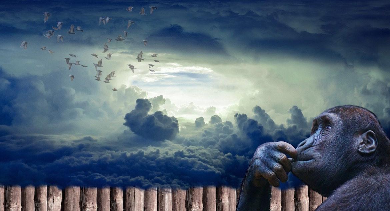 ape-sky-clouds-birds