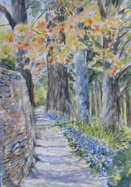 conifer-walk-with-bluebells