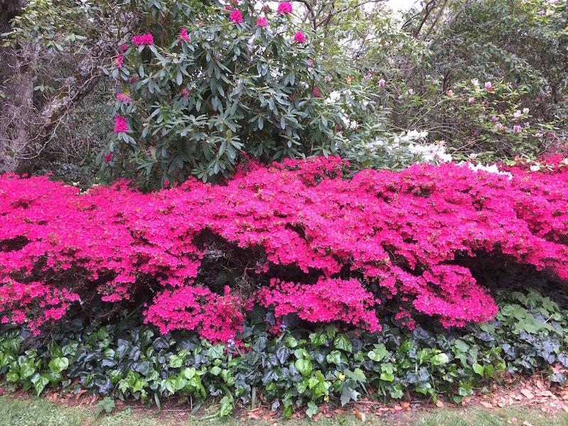 european-flowers-and-shrubs
