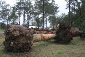Trees that were removed