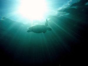 turtle-in-deep-water